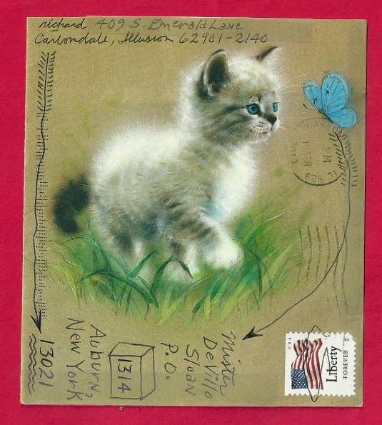 Richard Canard - kitten - 1